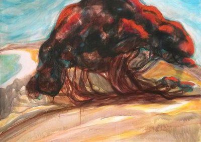 Edwards other tree